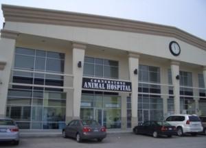 Cornerstone Animal Hospital 905 331 1500